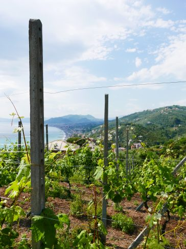 Liguria – Wines from the Italian Riviera